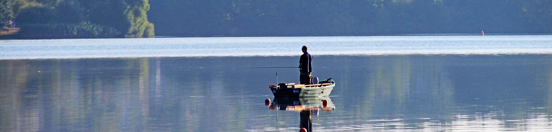 Zoeken-op-vis