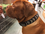 Hondenhalsband leer chroom beslag