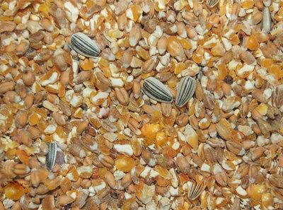 kippenvoer met gebroken mais