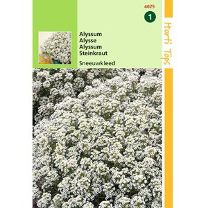Alyssum wit