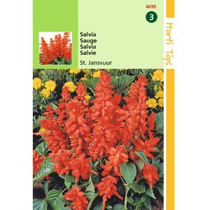 Salvia Bloemenzaad